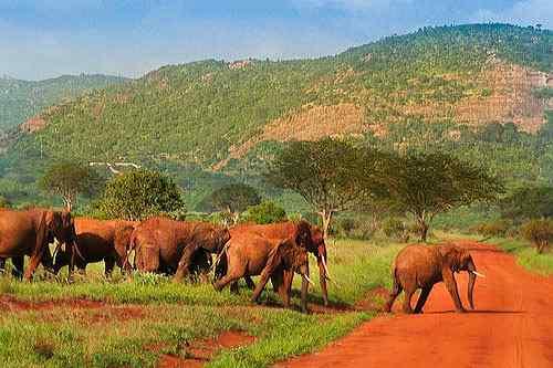 Eléphants dans le Tsavo National parc
