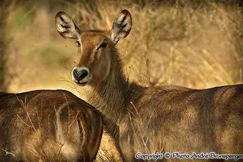 Parc des Aberdares Kenya