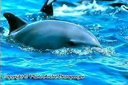 Dauphin Plongée Diani Kenya