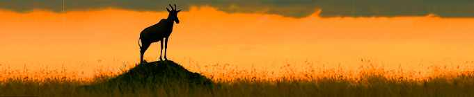 safari karibu kenya masaï
