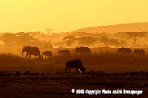 Coucher soleil parc Amboseli Kenya