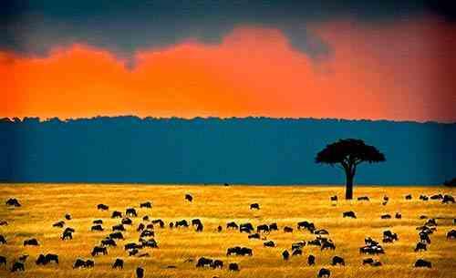 Safari pendant les grandes pluies mousson au Kenya
